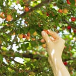 "Is Your Firm ""Low Hanging Fruit"" for Plaintiff Attorneys?"